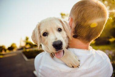 犬が痒そうにしていて皮膚が赤い!皮膚病の予防対策と応急処置