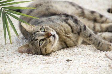 共働きでも安心な猫・子猫の飼い方は?マンション飼いのポイント徹底解説!