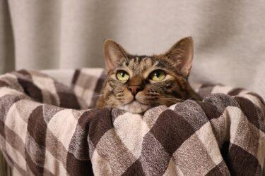 猫が去勢後に落ち着きがない原因はストレス?去勢後の注意点も!
