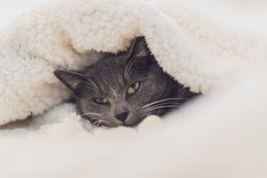 猫が寒がりな理由は?猫服は使えるの?冬前に猫の寒さ対策を考えておこう!