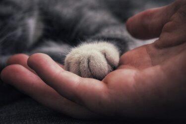猫がふみふみ中にする仕草の理由!顔を埋める・吸うのはなぜ?
