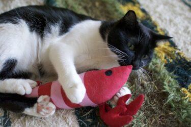 猫の甘噛み・けりけりの謎!理由からおすすめのおもちゃまで紹介します!