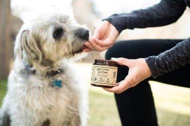 【体調別】犬のお留守番で長持ちする人気のおやつ5選!おやつを食べないときの対処法もご紹介!