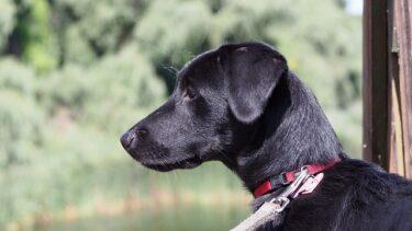 愛犬が首輪で痒そうにしていたら…?痒い原因と首輪に慣れるための対処法!