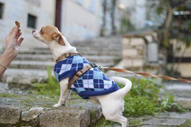 愛犬の暑さ対策に夏服を着せる必要性はあるの?メリットとデメリットをご紹介