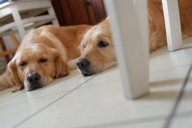 夏のエアコン電気代は犬を飼っていると高くなる?かかる電気代と節電方法について