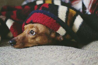 地震から愛犬を守るための防災グッズとは?日頃から備えておきたい防災対策を紹介!
