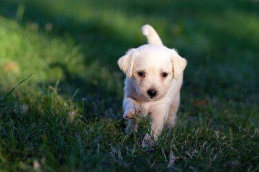 子犬が噛む・吠える!いつから・どうやってしつけをしたらいいの?