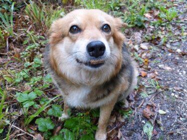 犬にささみを毎日あげてもいい?適切な量や茹で方&ささみしか食べない時の対処法
