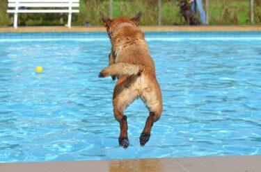 夏に必要な室外犬の暑さ対策とは?氷やグッズを使って犬の熱中症を防ごう!