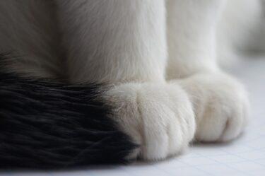 猫の長時間のふみふみはなぜ?可哀そうと思ってしまうけど大丈夫?