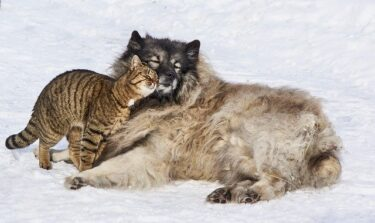 猫が頭突きをするのはなぜ?愛情表現って本当?しつこい場合の対処法!