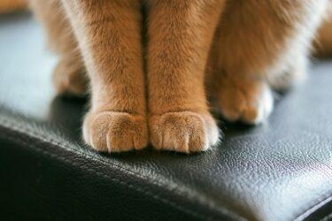 【猫のふみふみ行動】寝る前に布団にする理由は?意味を知って猫も飼い主も幸せ♪