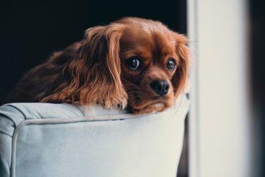 犬の無駄吠えは運動不足が原因の場合も!?本当に無駄なのか?愛犬の気持ちを知ろう!