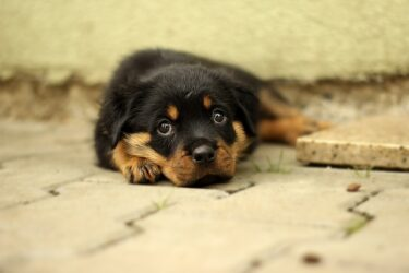 犬の無駄吠えは寂しさから?子犬・成犬・老犬による違いと分離不安などについて