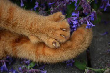 猫が爪切りを嫌がるようになった理由はトラウマ⁉成功へのステップとは?